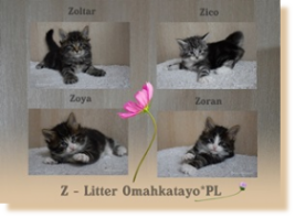 Z Litter Omahkatayo*PL 5 weeks old fot. © by Anna Lipecka